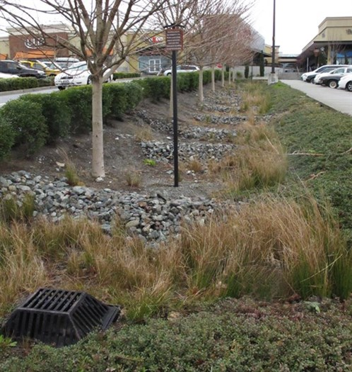 Vegetated Swale2